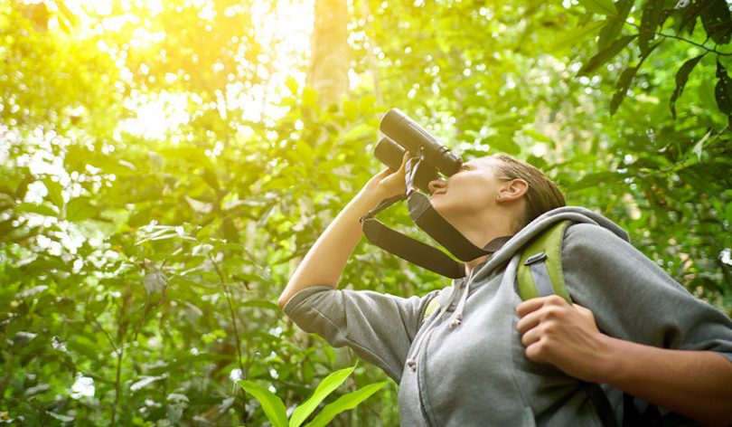 The Best Birding Binoculars for the Money in 2018