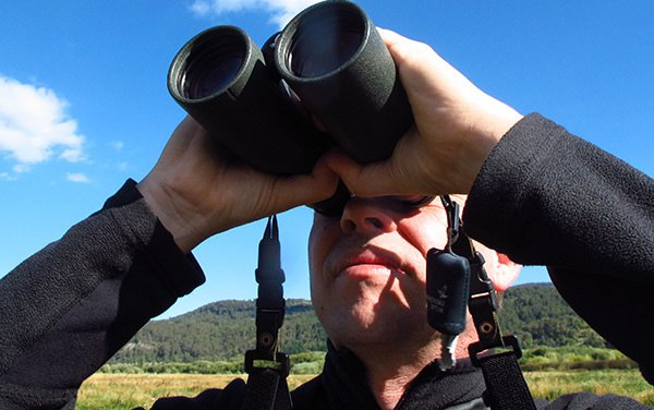 Best Birding Binoculars Under $200