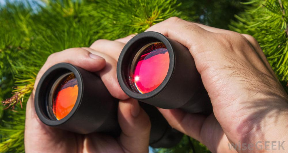 Best Birding Binoculars Under $300