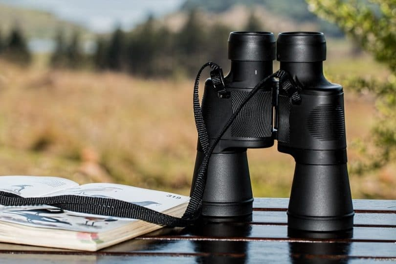 Best Hunting Binoculars for the budget